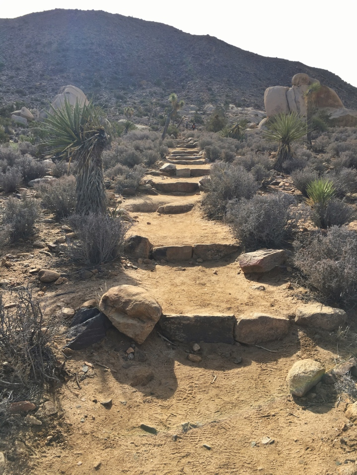 Ascent to Ryan Mountain
