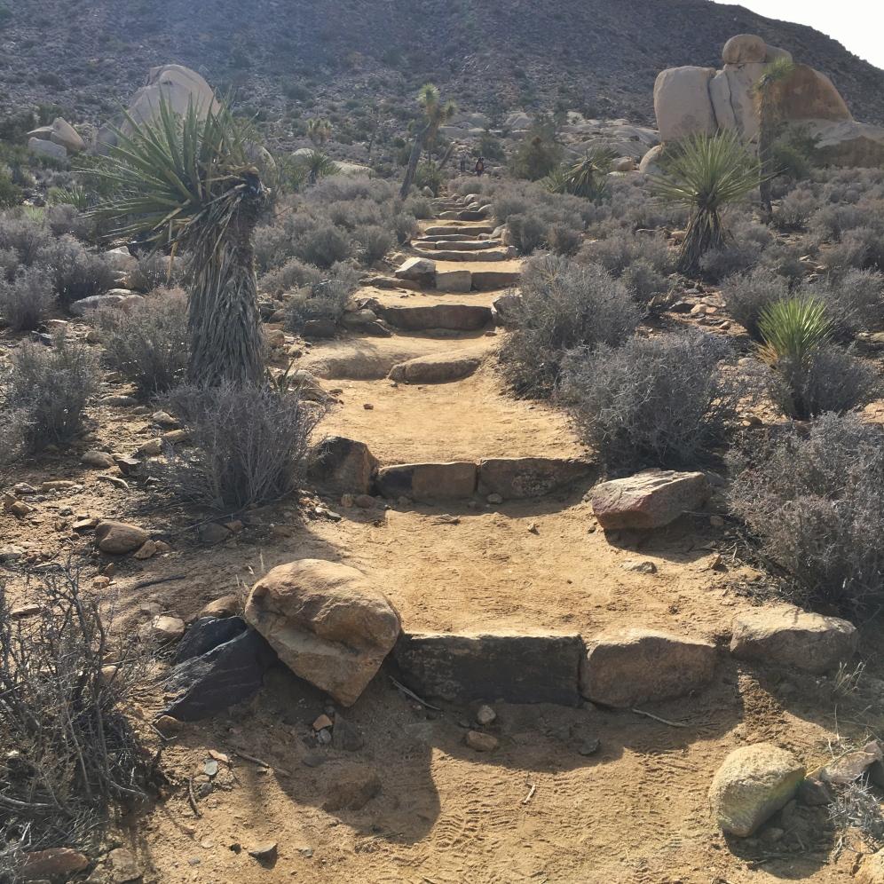 Ascent to Ryan Mountain