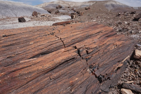 Petrified Bark