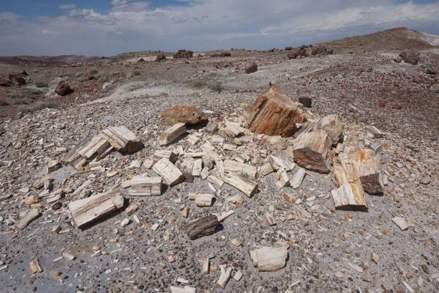Petrified wood blocks