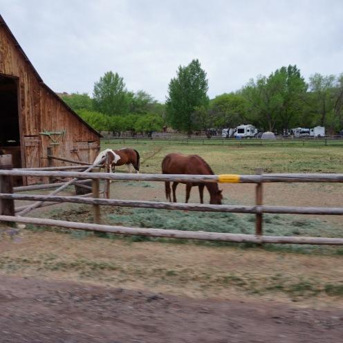 horses.capitol