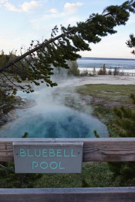 Bluebell Pool