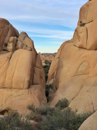 Jumbo Rocks view