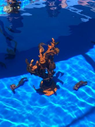 Seahorse_coral