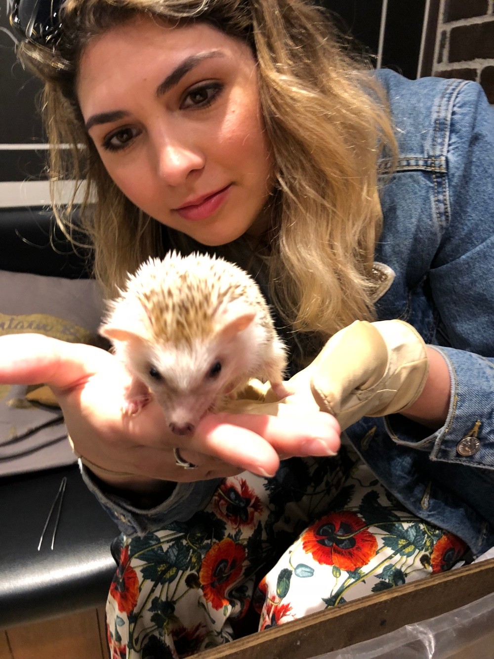 Nicole_hedgehog2