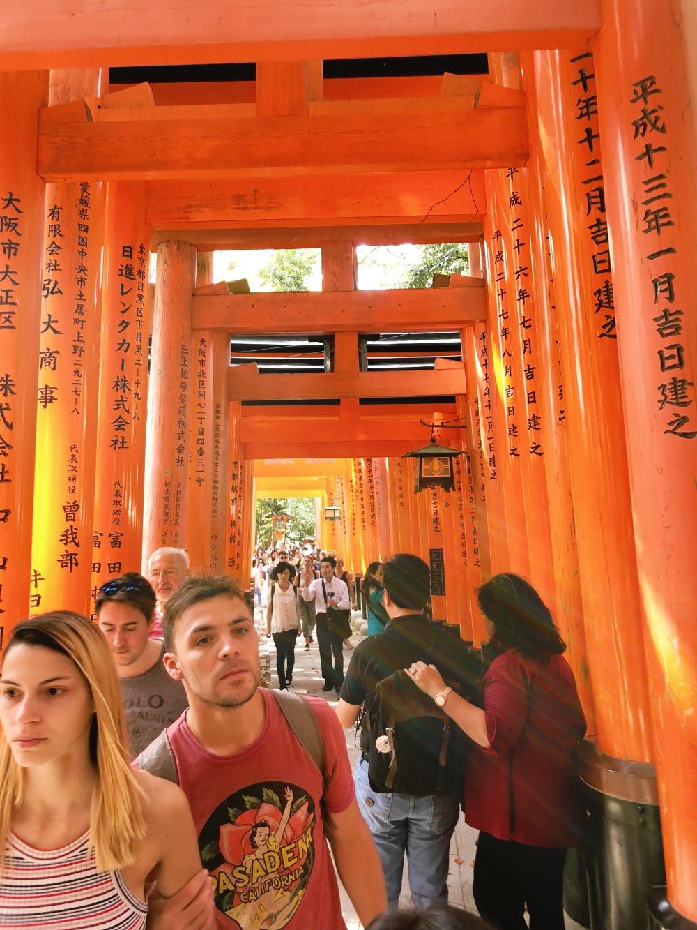 torii gate walk