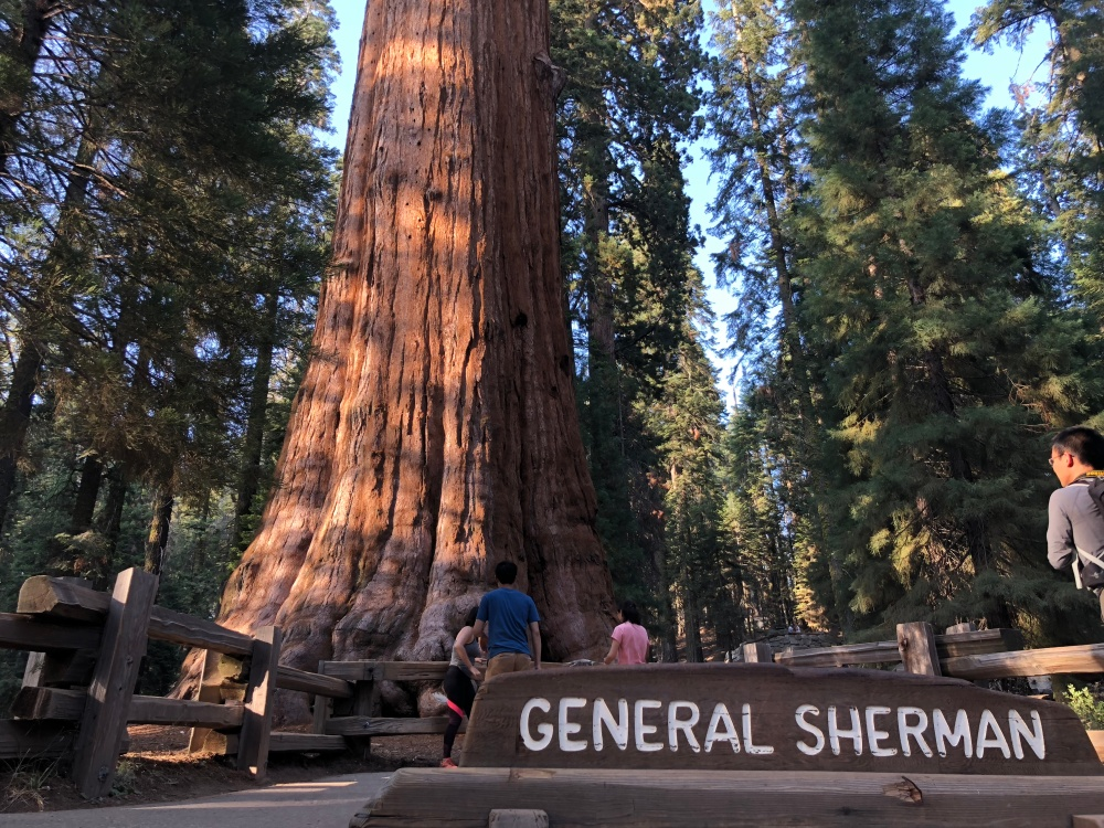 General Sherman without the crowds